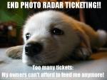 Freedom puppy hates photo radar