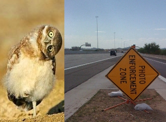 owl-sign